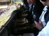 Play-offs 2011-2012: VVV-Venlo - Cambuur 4
